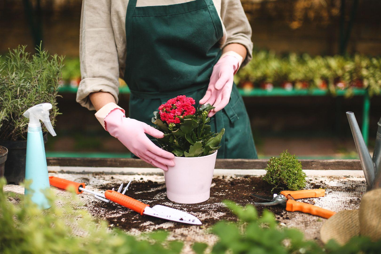 Horticulture - Pépinière Bienvenot | horticulture à Wisches
