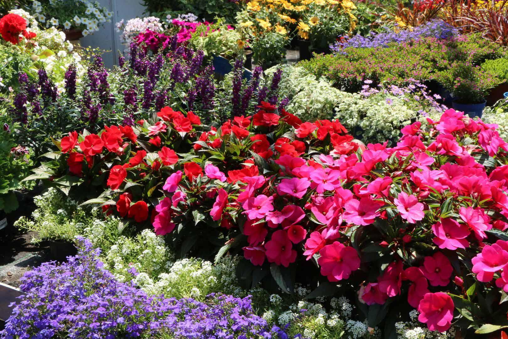 Horticulture - Pépinière Bienvenot | pépinière à Wisches