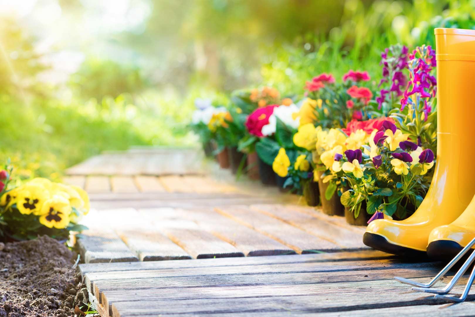 Horticulture - Pépinière Bienvenot | jardinerie à Wisches